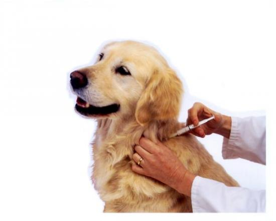 dog_being_vaccinated_vp.jpg